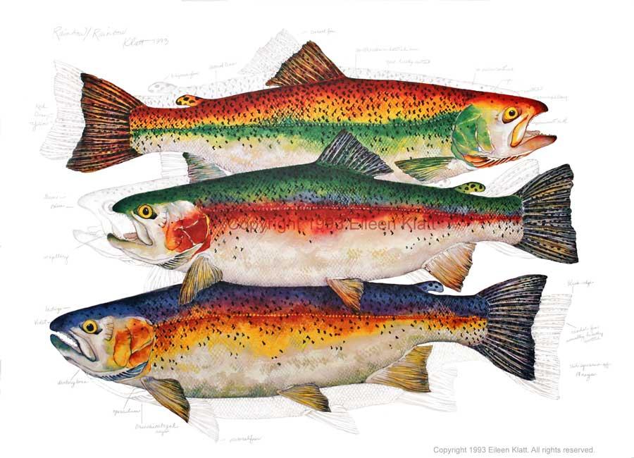 The Art of Eileen Klatt: New Fish, Old Favorites